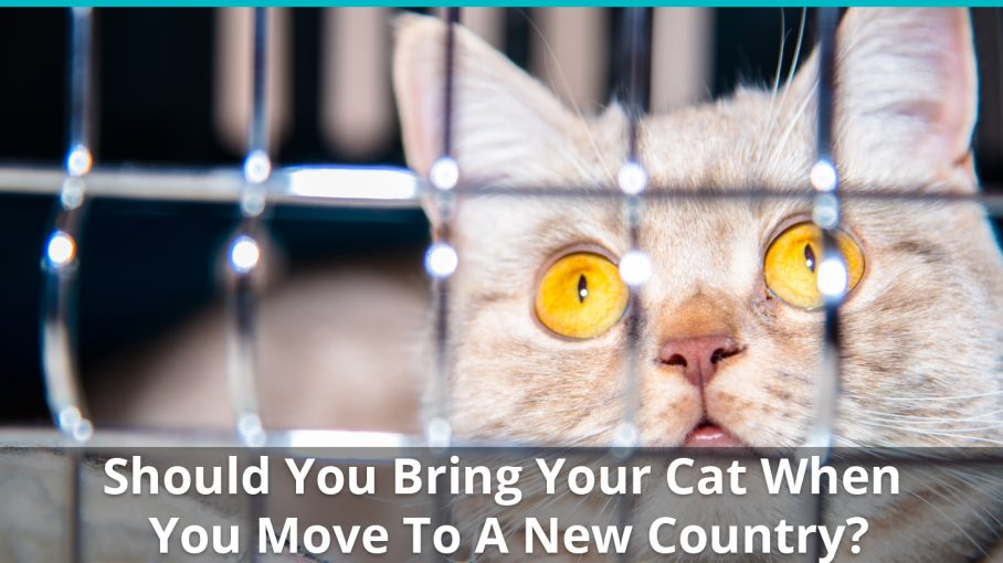 move cat to new country