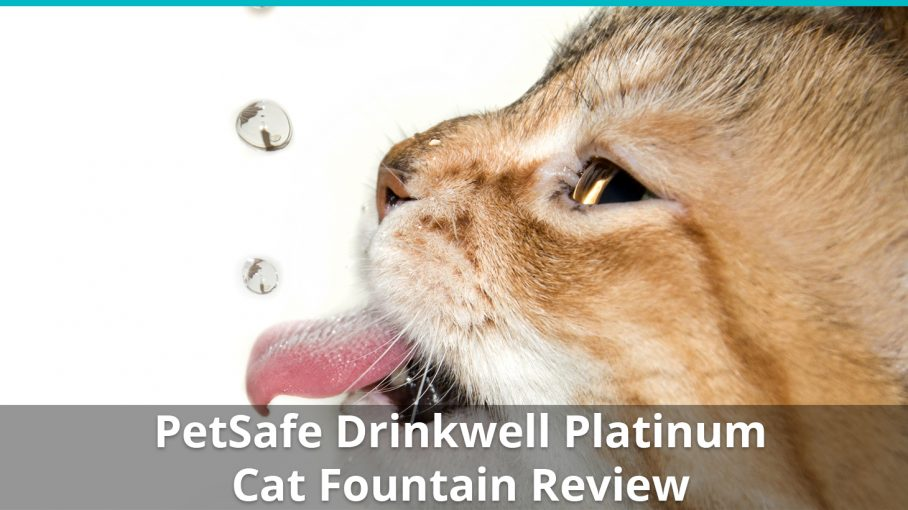 petsafe drinkwell platinum review