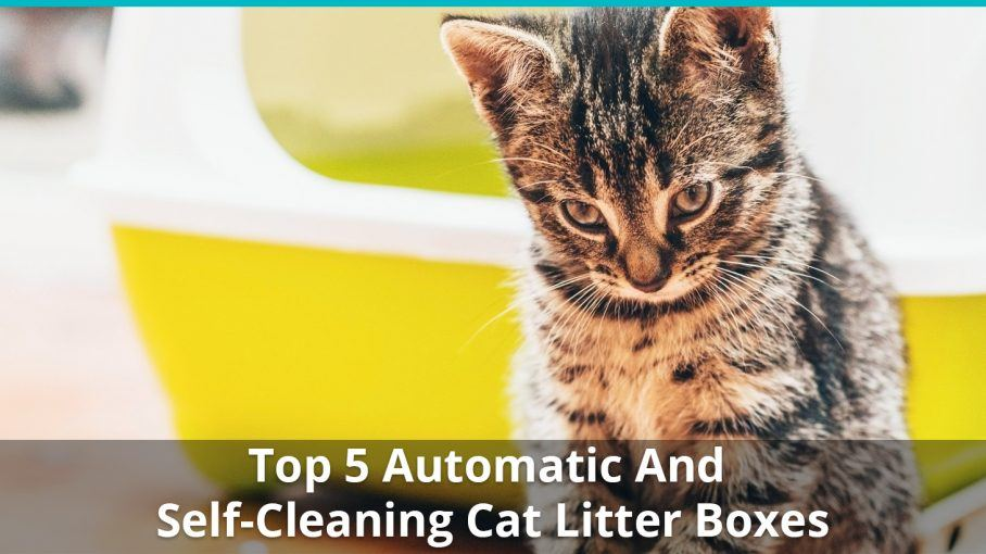 Best Automatic Cat Litter Box Reviews Of Self Cleaning