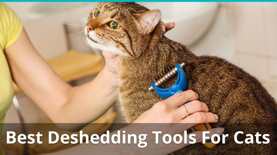 best deshedding tools for cats