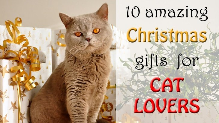 20 amazing christmas gifts for cat lovers
