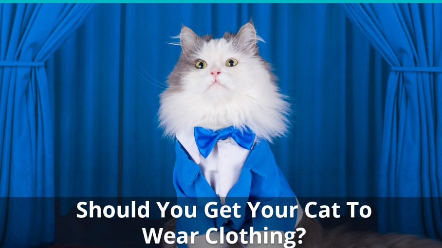 how to cat clothing