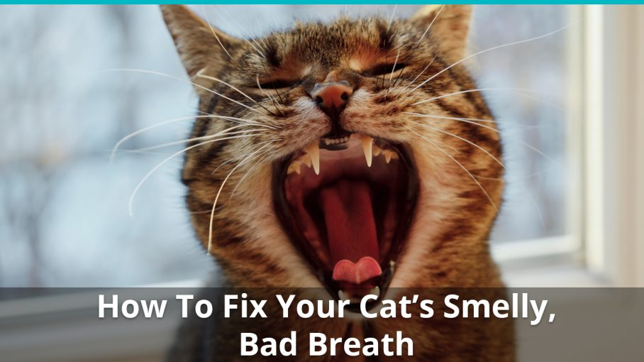 how to fix your cat 39 s nasty stinky bad breath make it smell better now. Black Bedroom Furniture Sets. Home Design Ideas