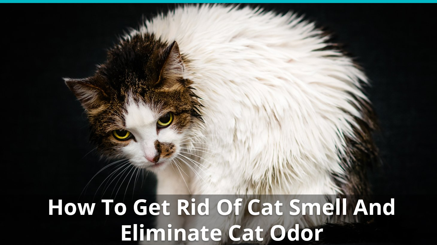 How To Get Rid Of That Stinky Cat Odor Smell Best