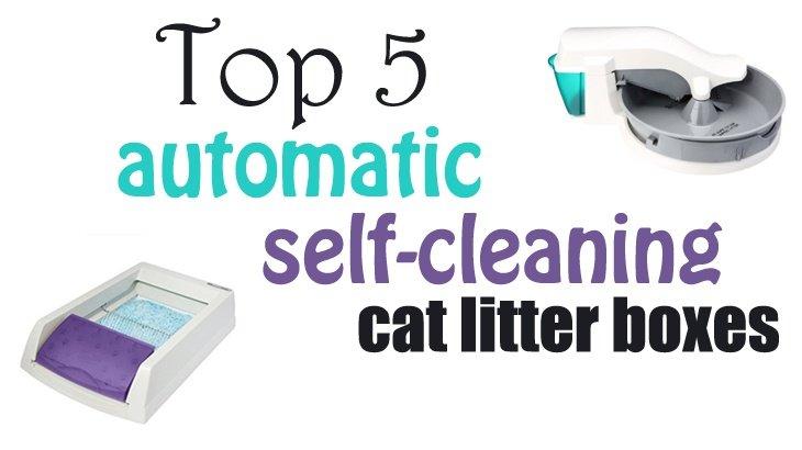 Cat Litter Box Mats Best 6 Best Cat Litter Mat Reviews