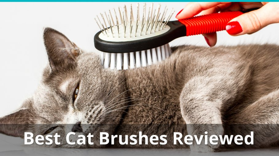 Reviewing The Best Cat Brushes To Keep Your Kitty S Fur Healthy Shiny
