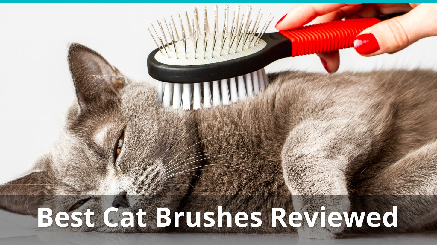 Effectively Remove 95/% Mats Tangles Fur /& Dirt MILDPETS Cat Brush for Shedding and Grooming for Short Long Haired Puppy /& Cats Deshedding Brush /& Massage Comb 2 in 1