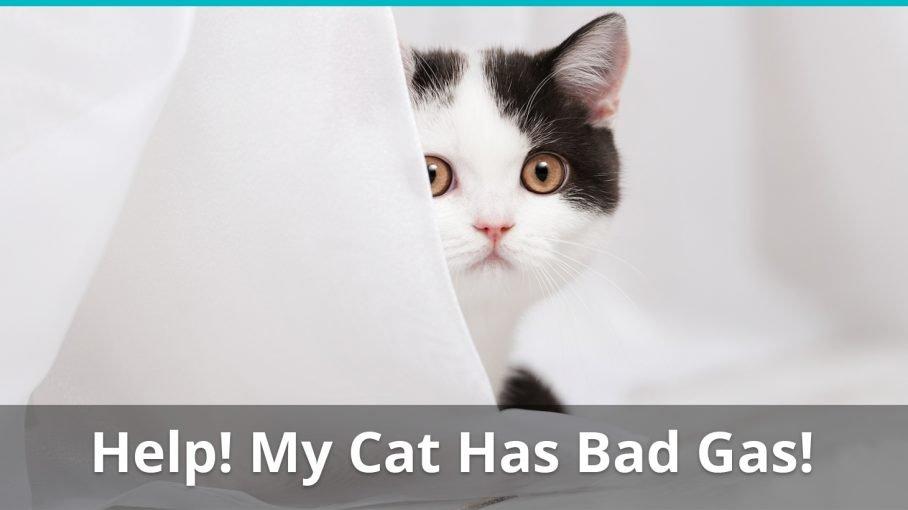 cat has bad gas