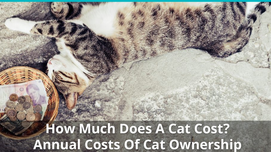 how much does cat cost
