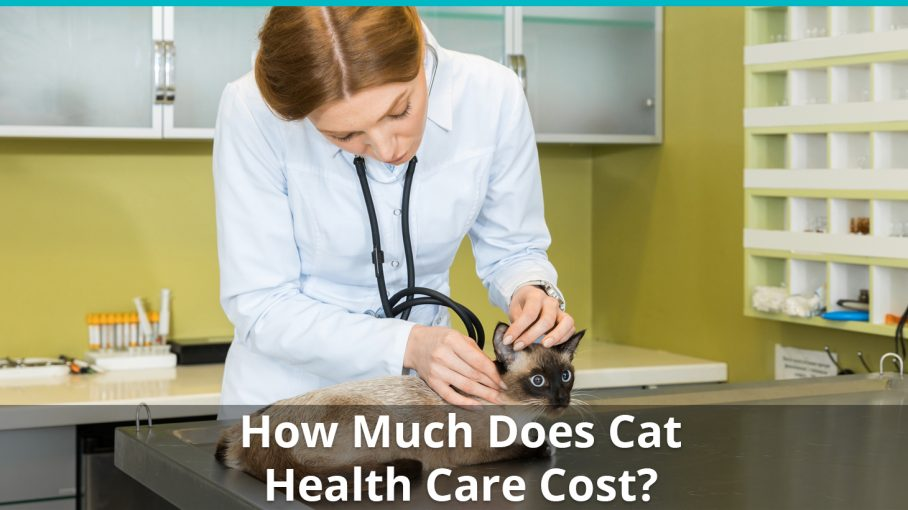 how much does cat health care cost