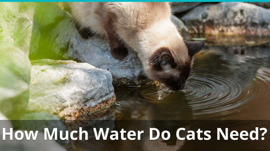 how much water do cats need