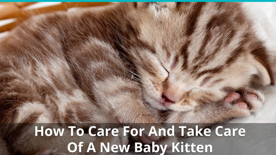 how to care for baby kitten
