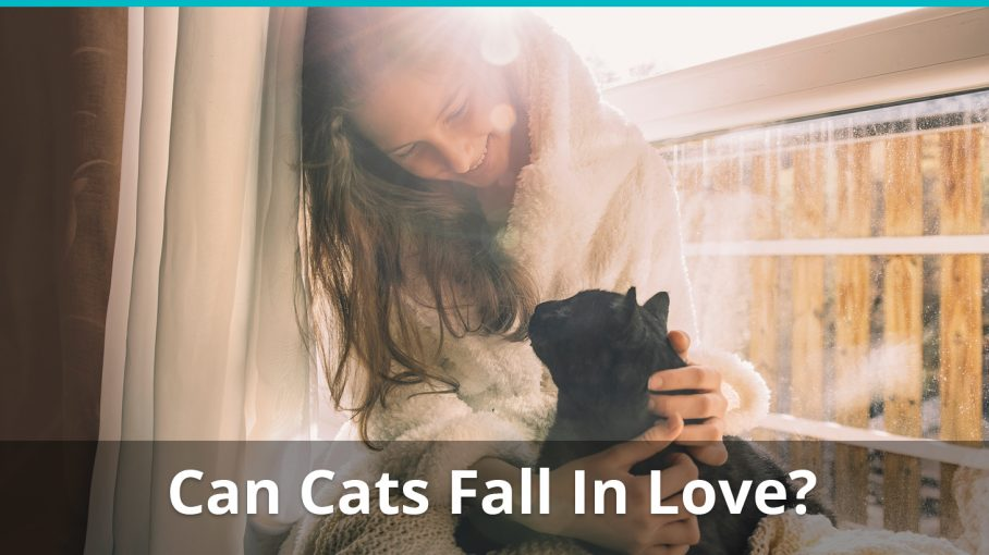 can cats fall in love