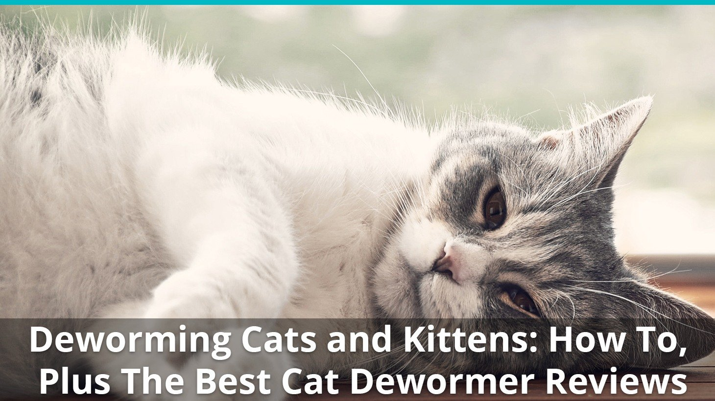Best Cat Dewormer for Roundworms & Tapeworms (OTC