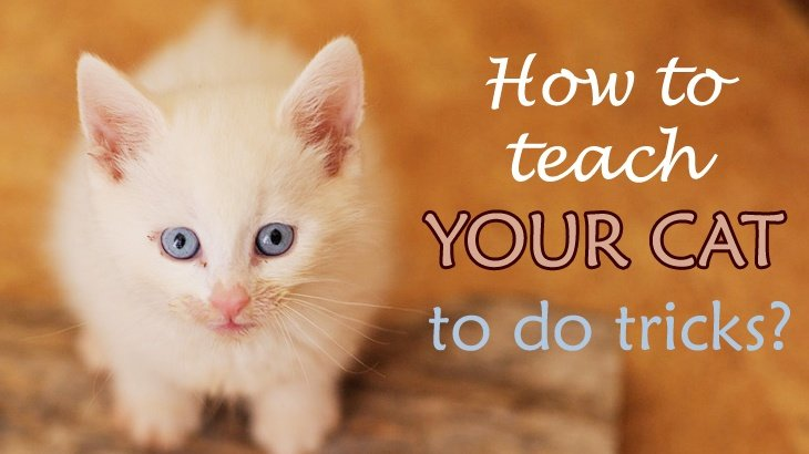 How To Teach Your Cat Tricks Like High Five And More