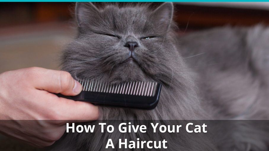 how to give cat haircut