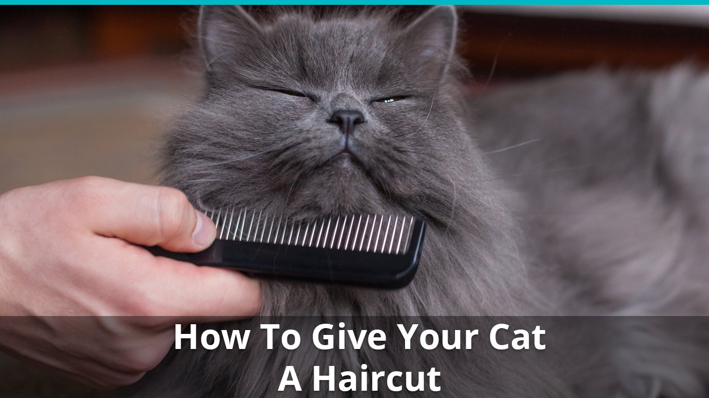 How To Give Your Cat A Haircut (Carefully!)