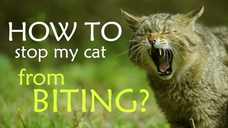 how to stop my cat from urinating on my bed