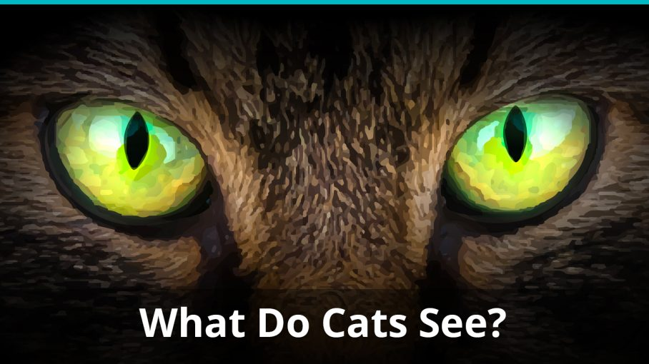 what do cats see