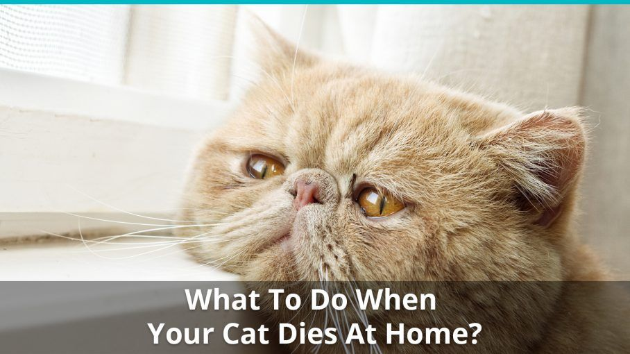 what to do when cat dies at home