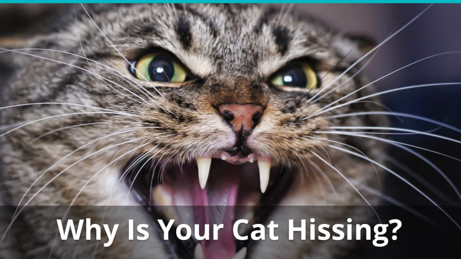 why is cat hissing