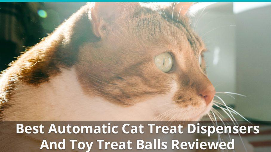 Https Www Catfooddispensersreviews Com Cat Food Reviews