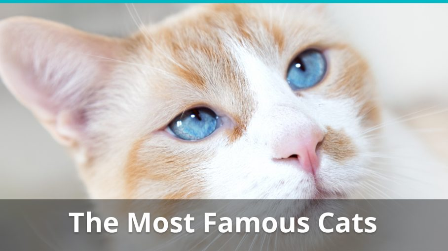 most famous cats in the world