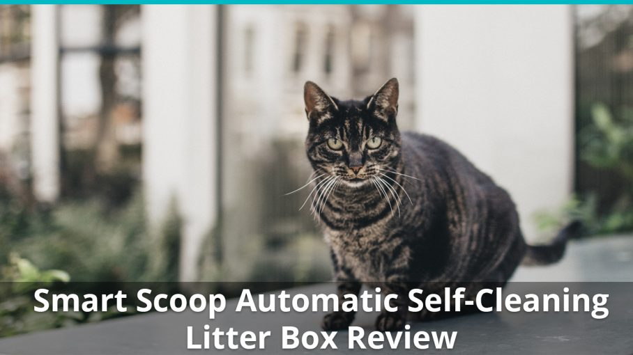 smart scoop automatic litter box review