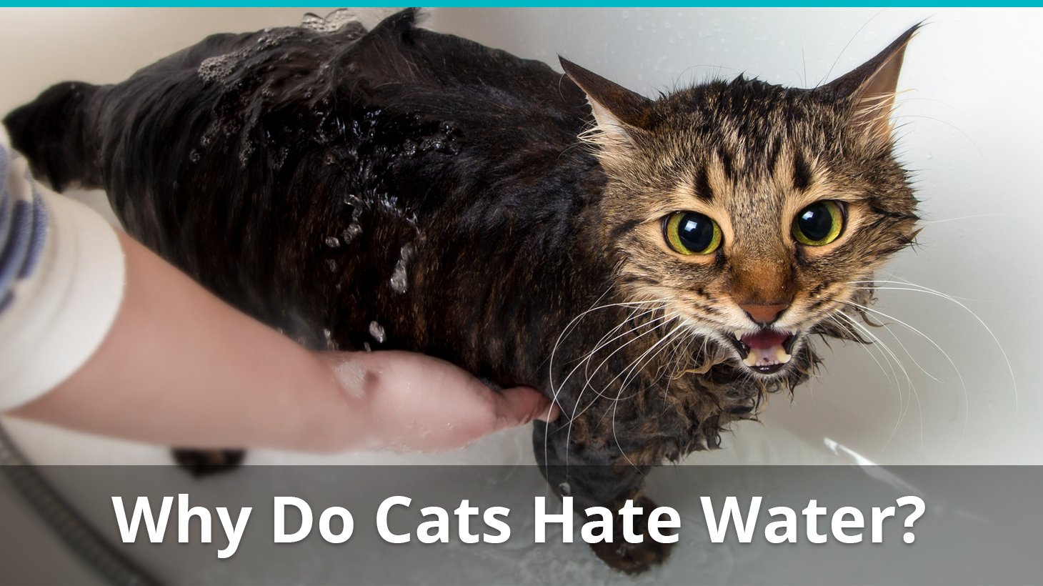 Do Cats Need Wet And Dry Food