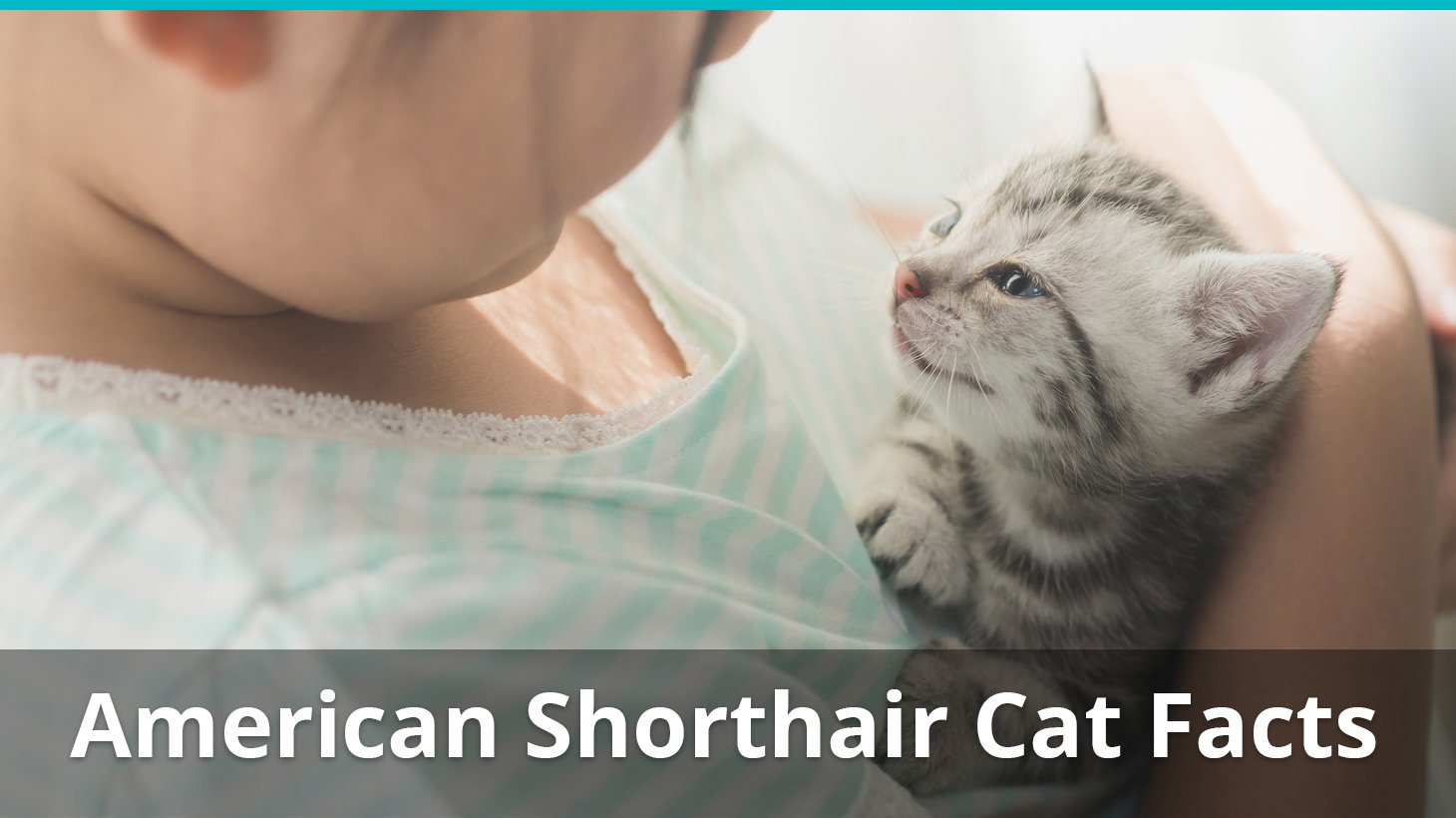 what is a American Shorthairs diet