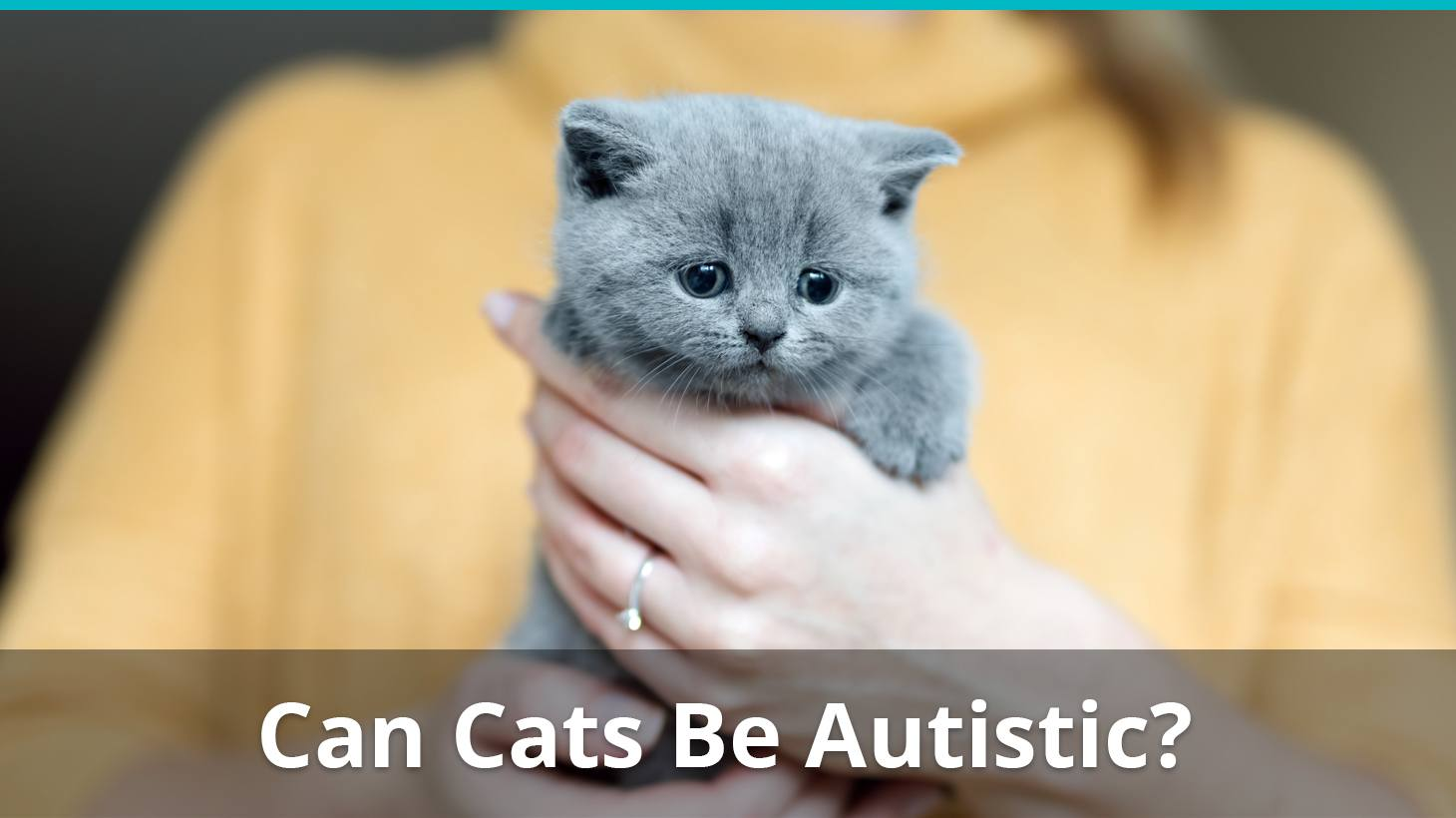 Autism In Cats Can Kitties Be Autistic?