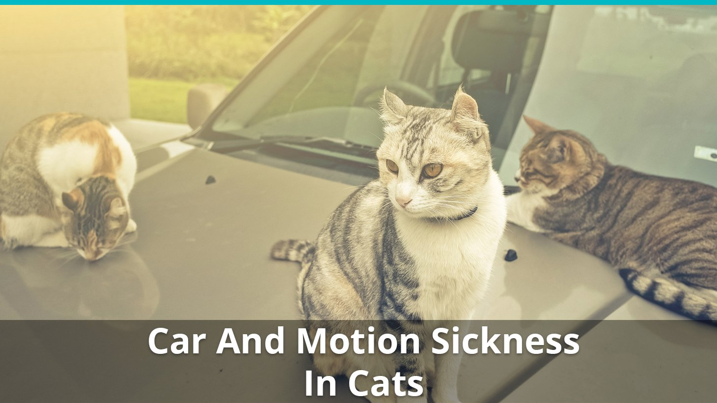 Car And Motion Sickness In Cats: How To Prevent And Treat It