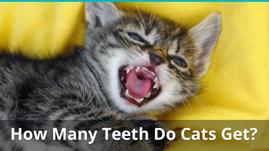 free kitten fayetteville nc