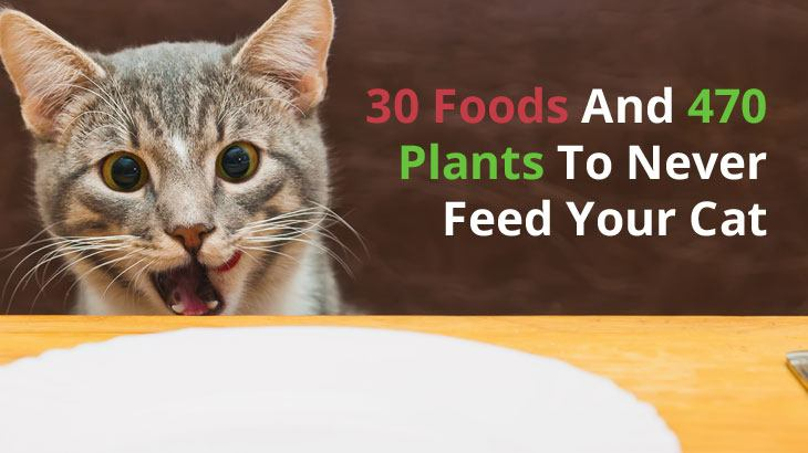 30 Foods And 470 Plants To Never Feed Your Cat