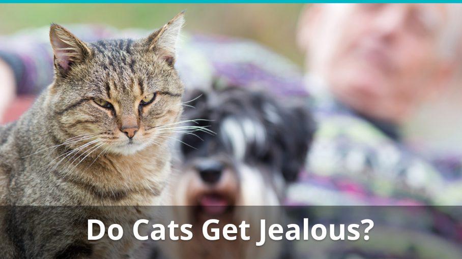 do cats get jealous