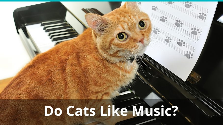 do cats like music