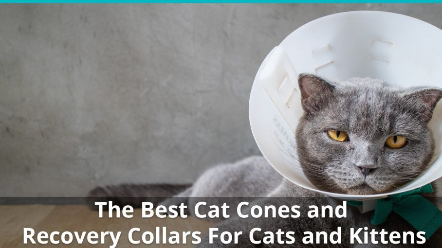 best cat cones and recovery collars