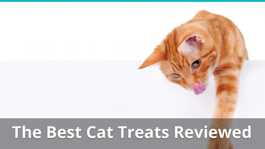 best cat treats reviews