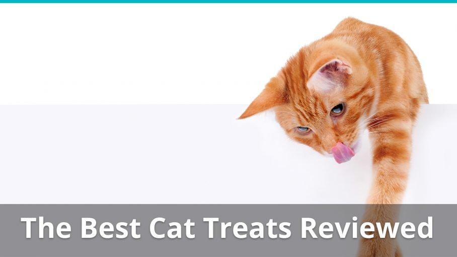 best cat treats reviews