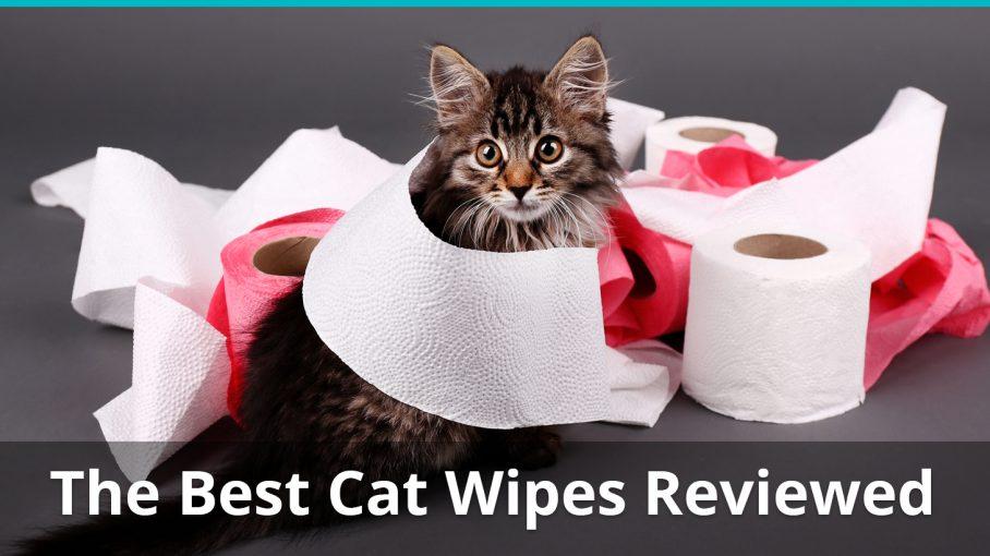 best cat wipe reviews