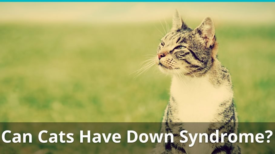 can cats have down syndrome