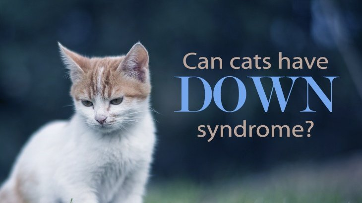 Down Syndrome Causes Types and Symptoms  Healthline