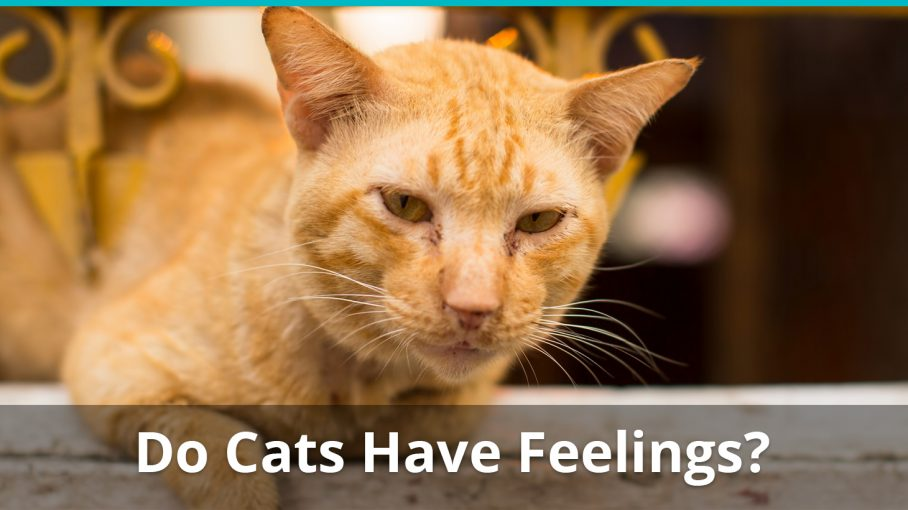 do cats have feelings