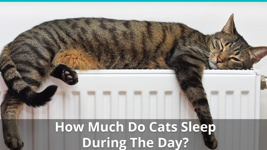 how much do cats sleep during the day