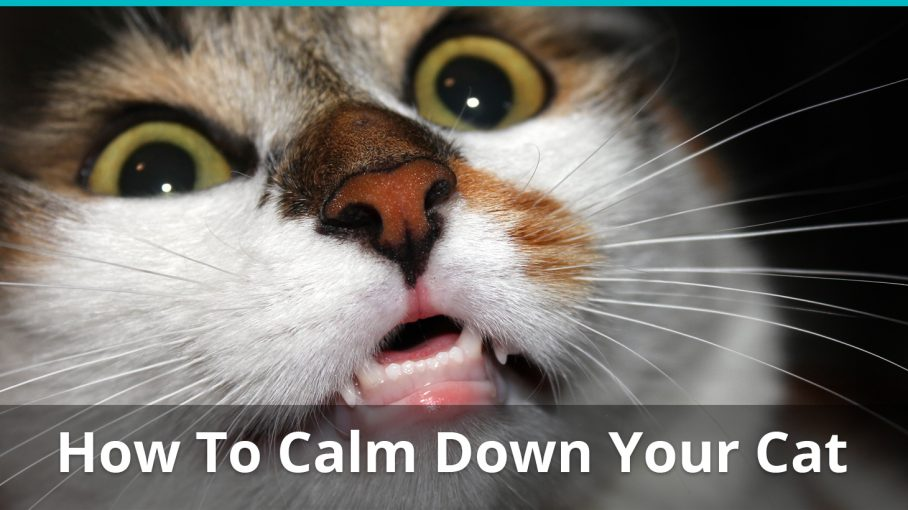 how to calm down your cat