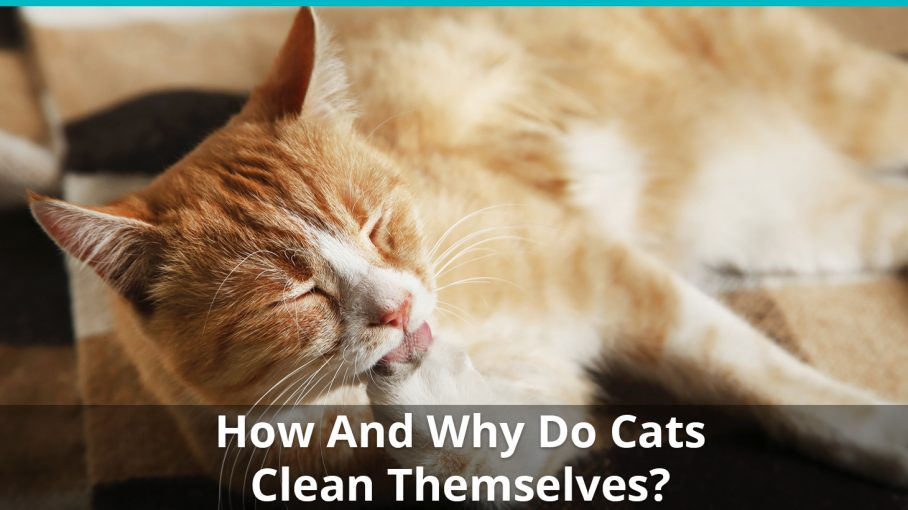 how why cats clean themselves