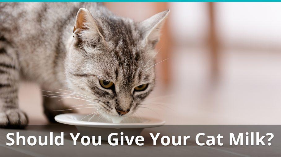 should i give my cat milk