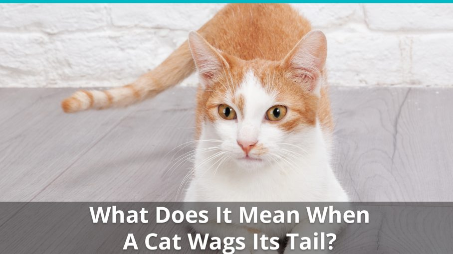 what does it mean cat wags tail