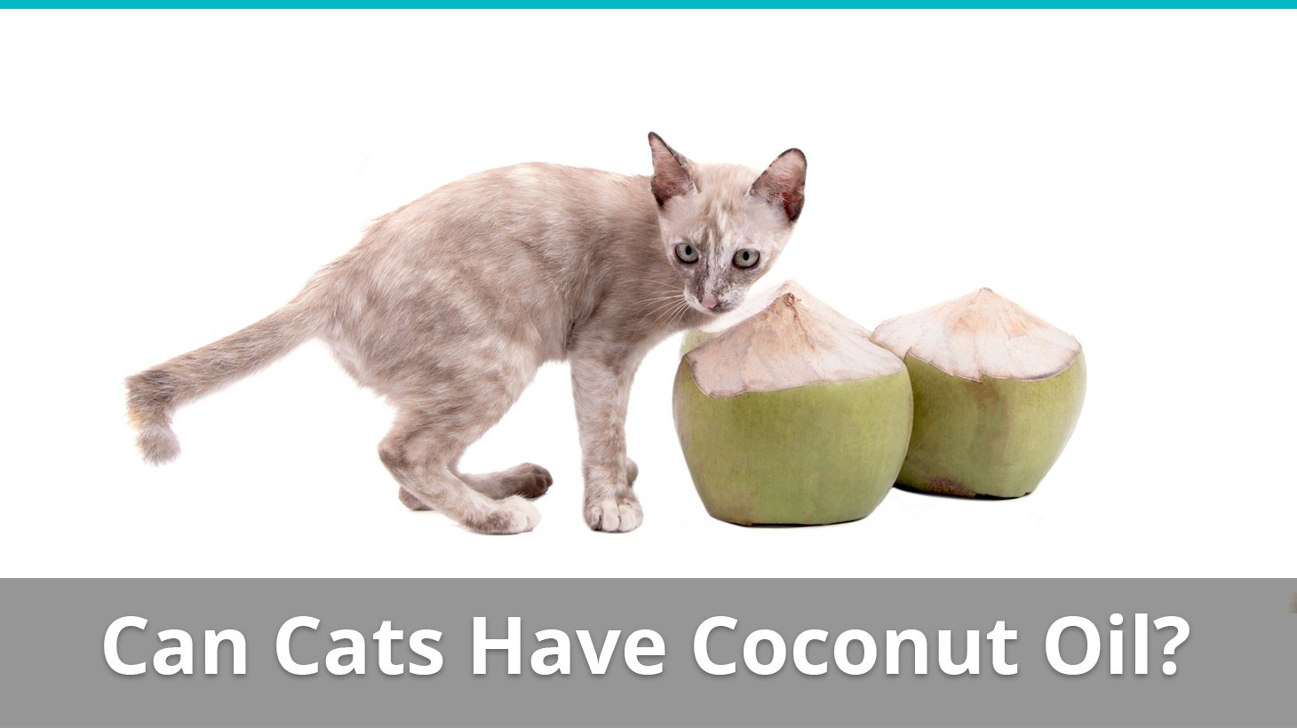 "Coconut oil has a positive effect on the immune system, which also makes cats less likely to suffer from an allergic reaction. By optimizing the immune system and increasing defenses against viral and bacterial pathogens, coconut oil helps prevent ""misfires"" by the immune system, also known as."