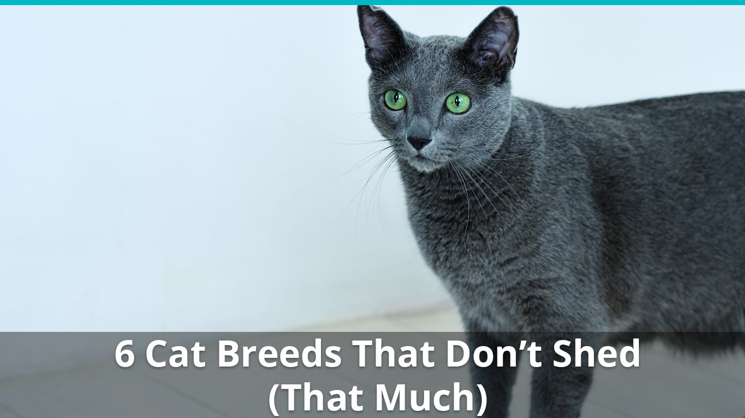 Top 6 Cat Breeds That Don T Shed
